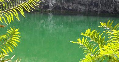Um lago com algumas folhas, próximo a uma caverna