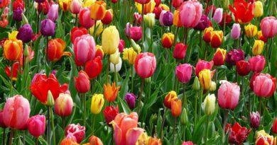 Flores coloridas. Primavera a estação das Flores