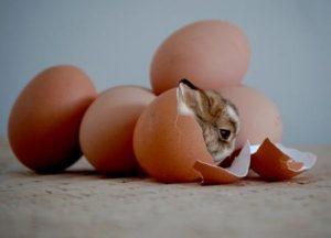 Coelho saindo de um ovo. Páscoa é Renascer, é Vida Nova! É Passagem