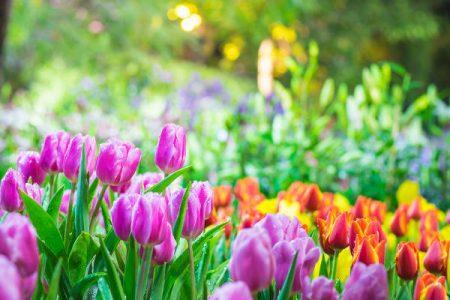 Lindas flores. Das Estações do Ano a Primavera é uma das mais Belas.